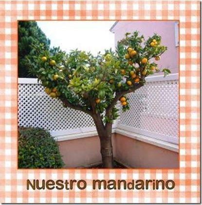 mandarino 2 (page 1)