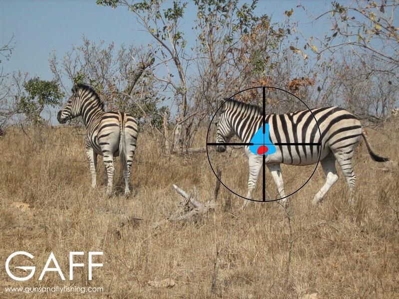 Zebra Vitals.jpg