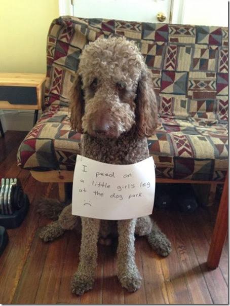dogs-dirty-secrets-10