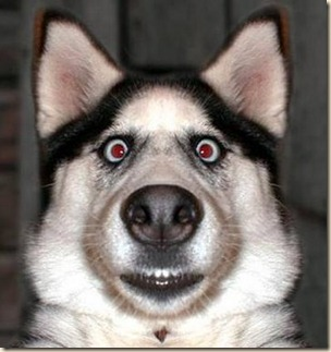 Dog-Surprised
