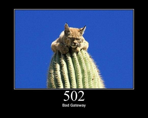 HTTP-Status-Cats-25