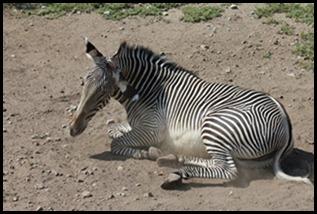 Zoo5 048