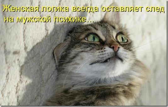 80718854_zhenskaya_logika_kotomatrica