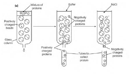 Multiple Choice Questions on Protein Purification ~ MCQ