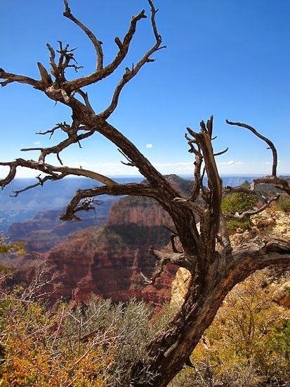 Grand Canyon North Rim (1)