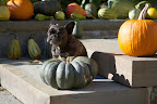 All of these pumpkins and gourds on display outdoors has got me thinking about something very important.