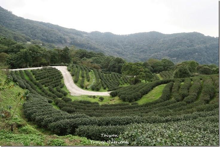 三峽熊空茶園 (19)