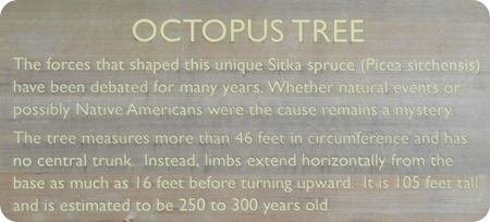 Octopus tree sign