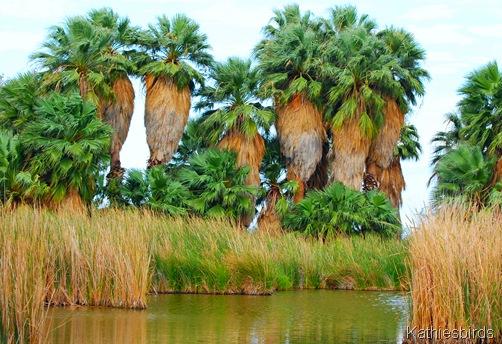 19. Agua Caliente Park-kab