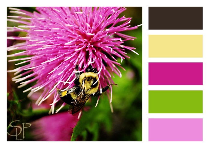 Bee and thistile-color block
