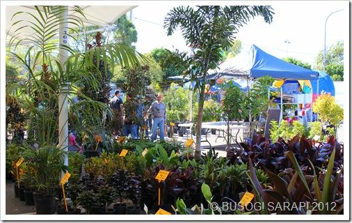 PLANTS, ROCKLEA SUNDAY DISCOVERY MARKET© BUSOG! SARAP! 2012