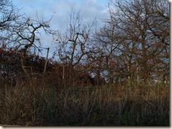 Vechmaal, Hekslaan: appeltjes zijn blijven hangen voor de vogels