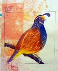 quail, day 7