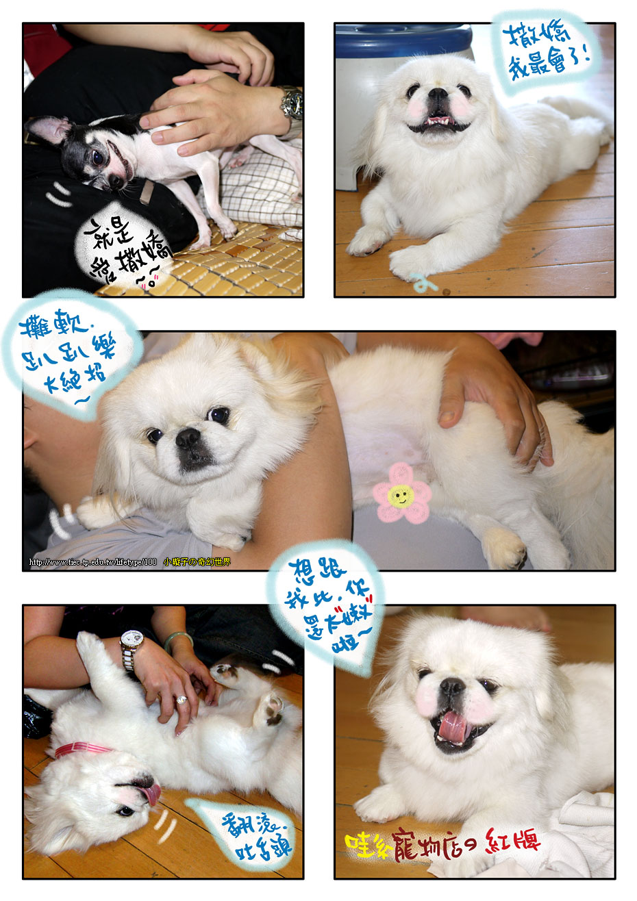 dog_blog6.jpg