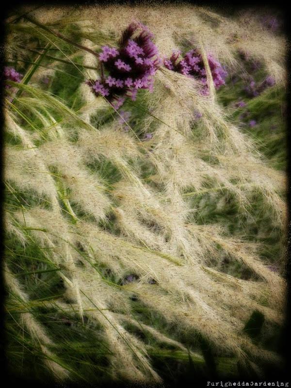 dry garden, grasses