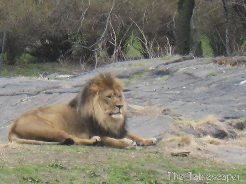 Bronx Zoo5