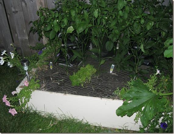 Garden July 24