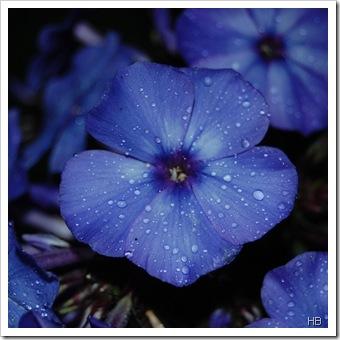 Blüte © H. Brune