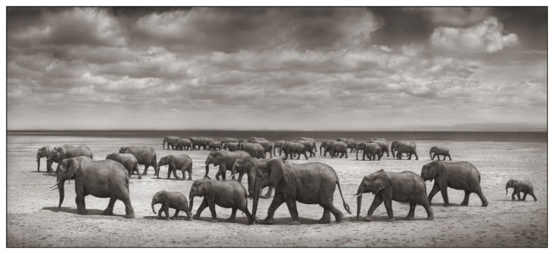 ElephantHCLBSD