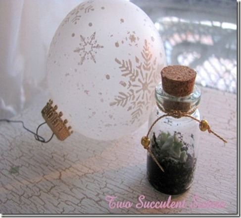 Tiny Succulent in a Bottle_thumb[2]