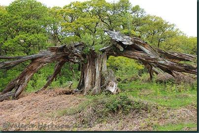 2-broken-tree