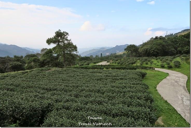 三峽熊空茶園 (13)