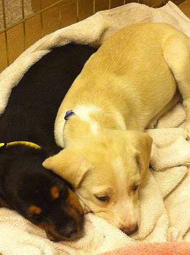 Spooning pooches...this degree of cuteness is truly hazardous.