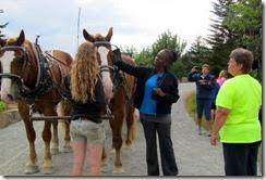 Horses take a break atop Day Mountain