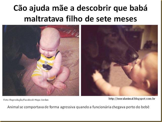 cao-bebe