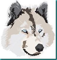 lobos imagenesifotos (7)