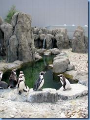 0093 Alberta Calgary - Calgary Zoo outside Penguin Plunge - Humboldt penguin