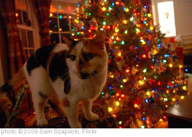 'christmas cat' photo (c) 2009, Sam Szapucki - license: http://creativecommons.org/licenses/by/2.0/