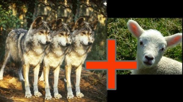 tre lupi e un agnello