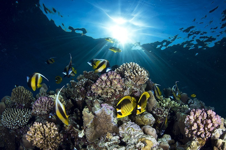 miami-underwater-photo-contest-3