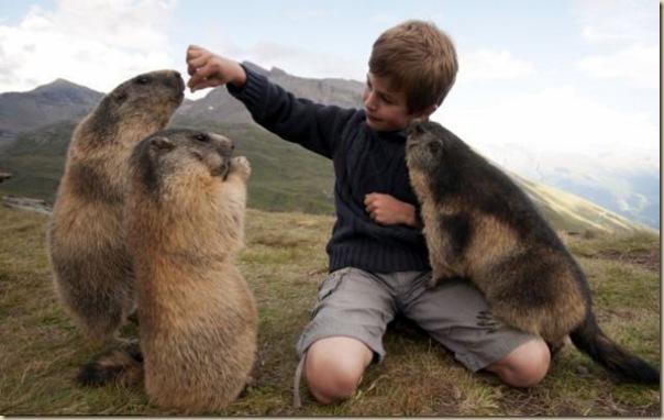 L'enfant et les marmottes-003
