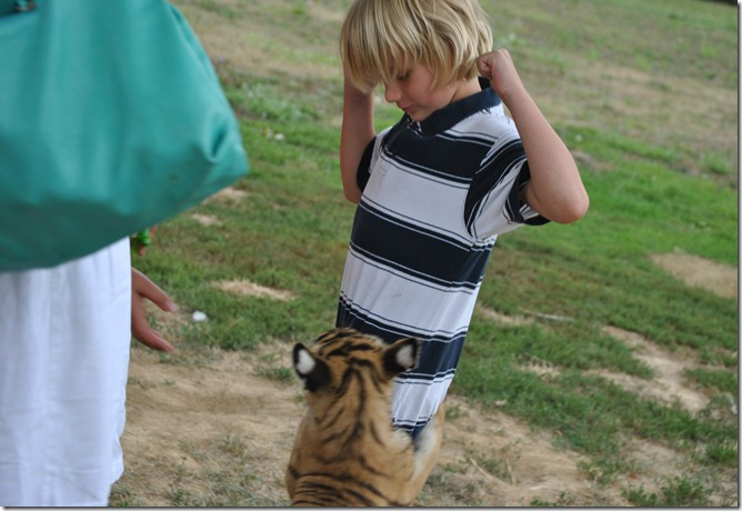 Tiger Zoo 111