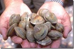 Continúa la veda total para la extracción de moluscos bivalvos
