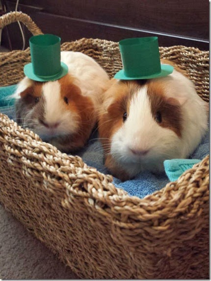 animals-st-paddys-day-012