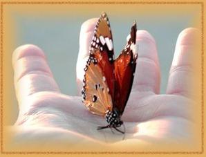 vlinder_2