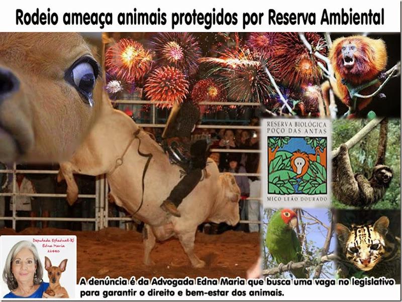 rodeio_reserva