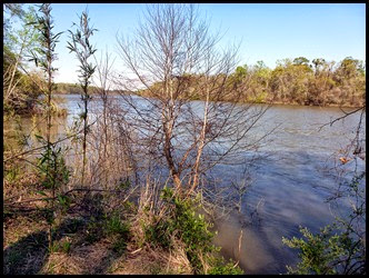 Hiking - The Apalachicola River