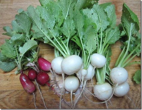 French breakfast radishes and Tokyo Cross turnips