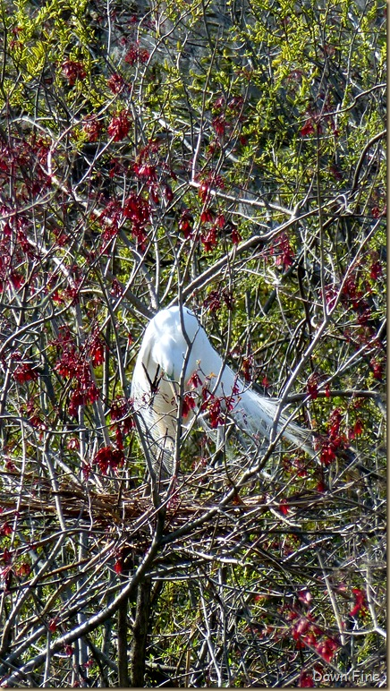 Magnolia Plantation_427