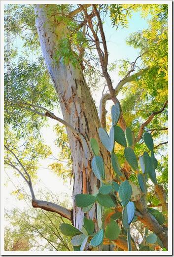 131203_TucsonBotanicalGarden_011