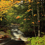 Fall Along The Little Carp River / Porcupine Mountains State Park / Upper Michigan