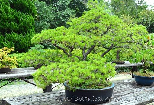 Glória Ishizaka -   Kyoto Botanical Garden 2012 - 49