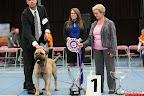 20130511-BMCN-Bullmastiff-Championship-Clubmatch-2576.jpg