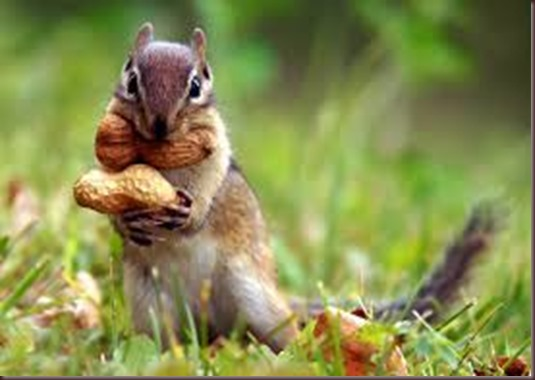 Amazing Animals Pictures Squirell (4)
