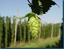 220px-Hopfendolde-mit-hopfengarten hops bitter beer