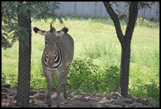 Zoo5 063
